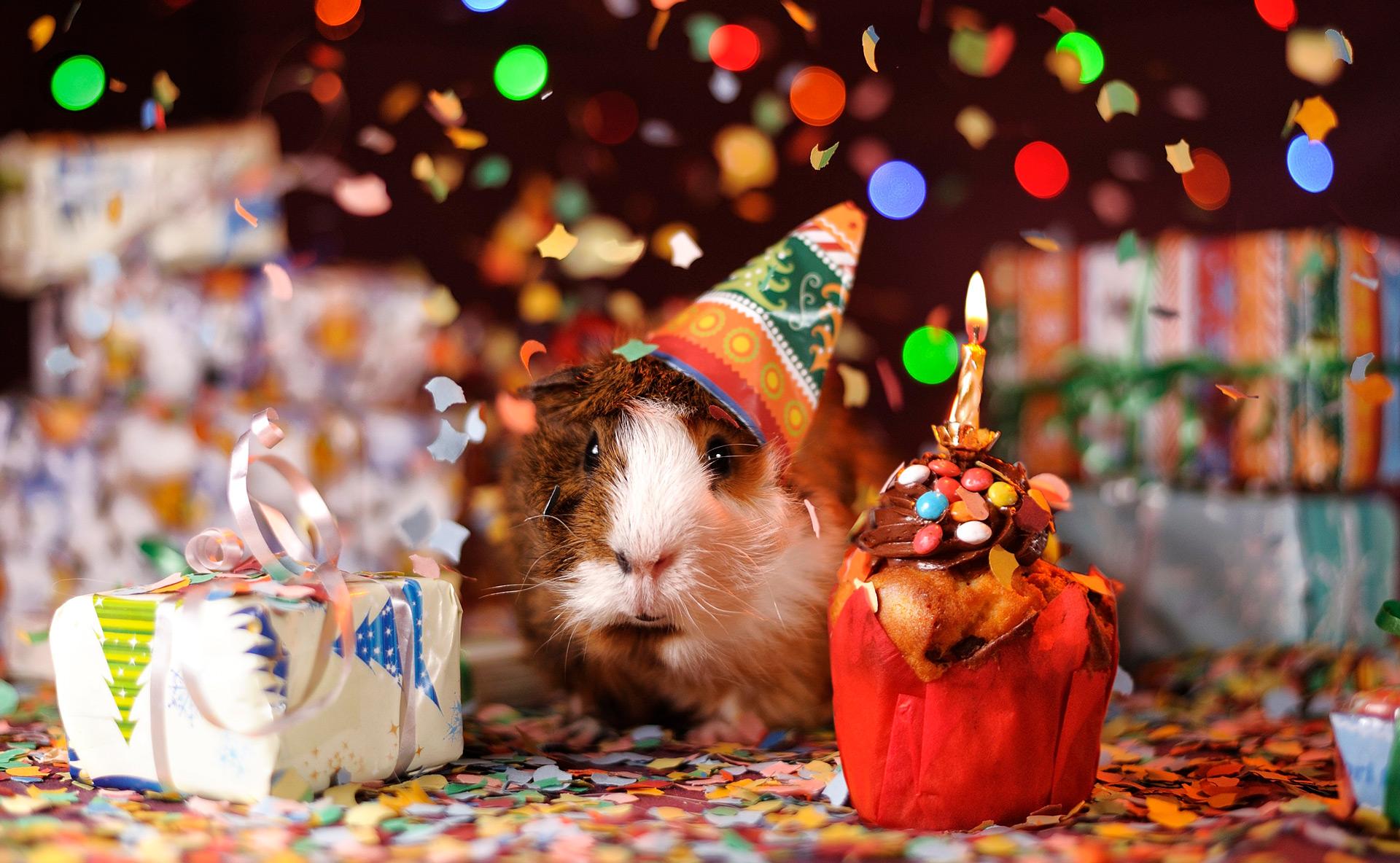 Cumpleaños animales